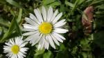 Nokia_lumi620_foto1