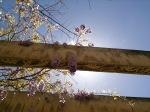 Sony_Xperia_Z_foto7